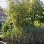 Das Gasthaus lugt aus der Natur ...