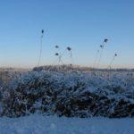 Winterliches Stilleben in Rheinsberg - Warenthin